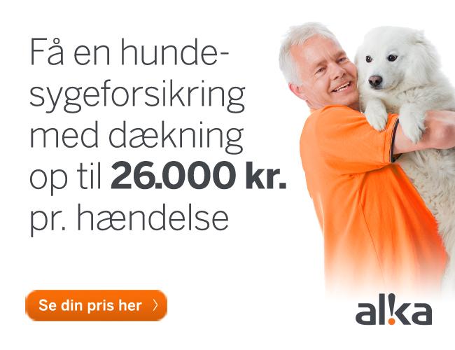 alka forsikring hund